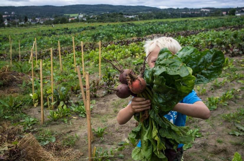 Herlige grønnsaker som blir enda bedre med godt stell.