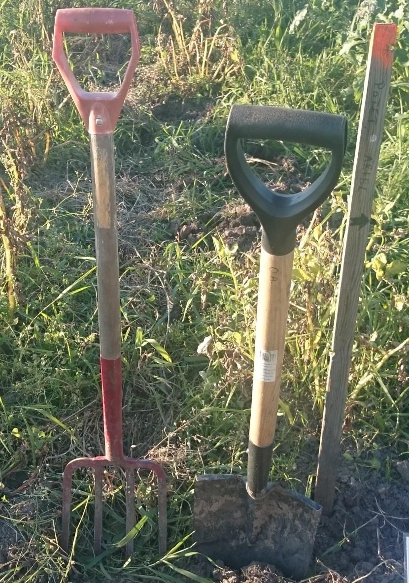 potet-høsteklar